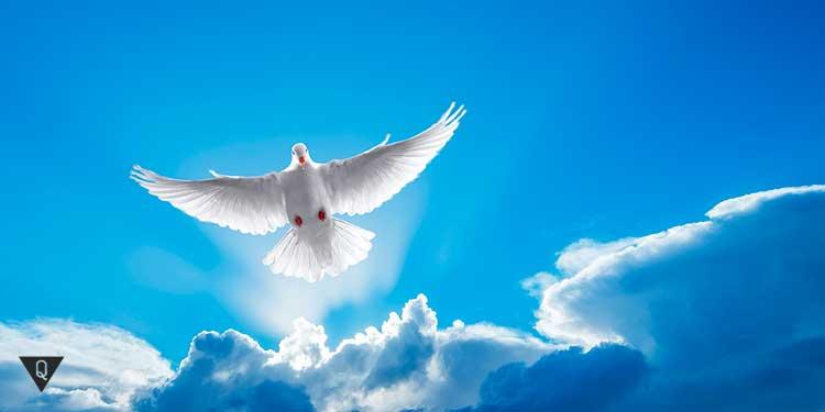 голубь летит в голубом небе на фоне облаков