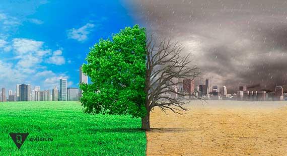 картинка дерева разделенная на 2 половины зеленое и серое