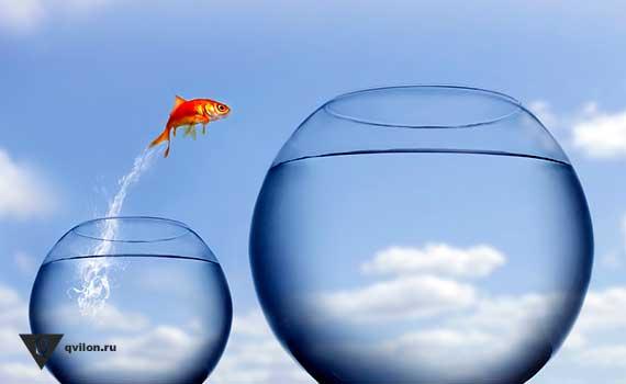золотая рыбка прыгает из маленького в большой аквариум