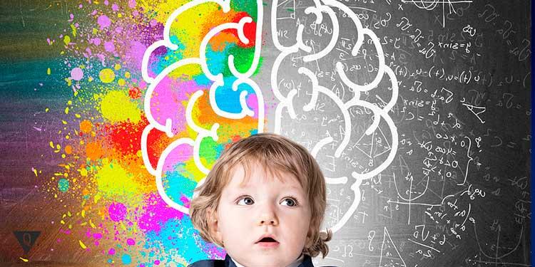 ребенок на фоне нарисованных полушарий мозга