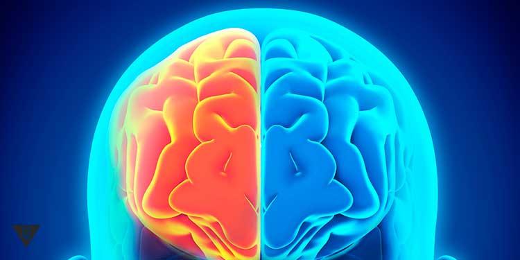 рисунок правого полушария мозга