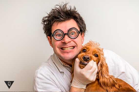 сумасшедший ветеринар и собака