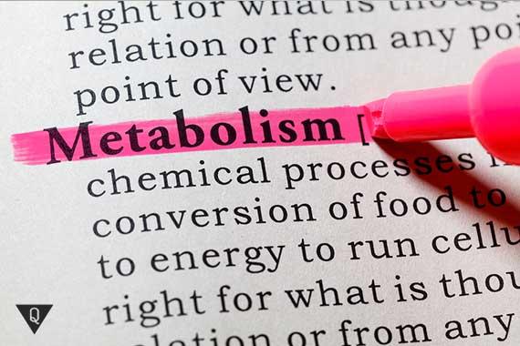выделенное маркером слово metabolism
