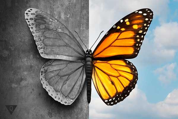 наполовину цветное фото бабочки