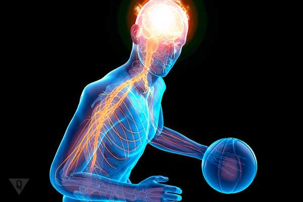 мозг баскетболиста