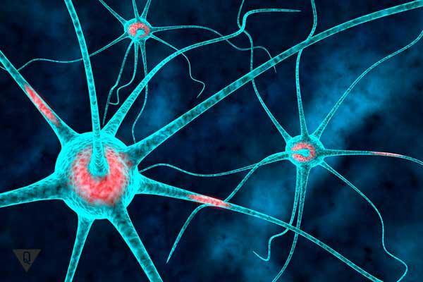 изображение нейрона