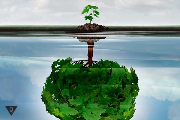 большое отражение деревца