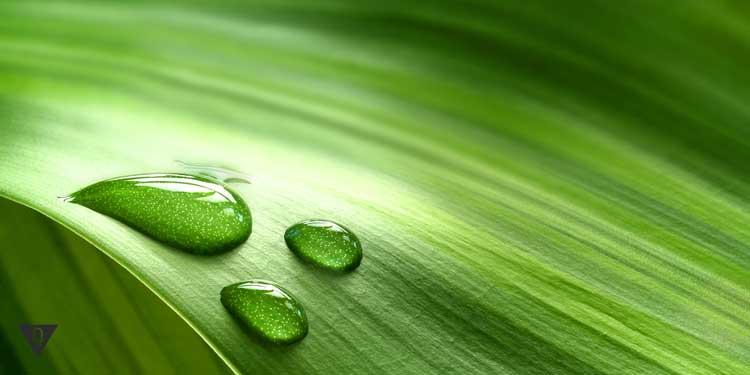 Капли на зеленом листе