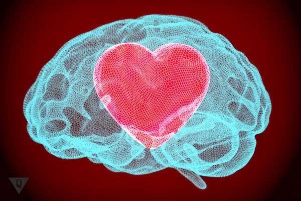 Рисунок сердца, который расположен внутри мозга