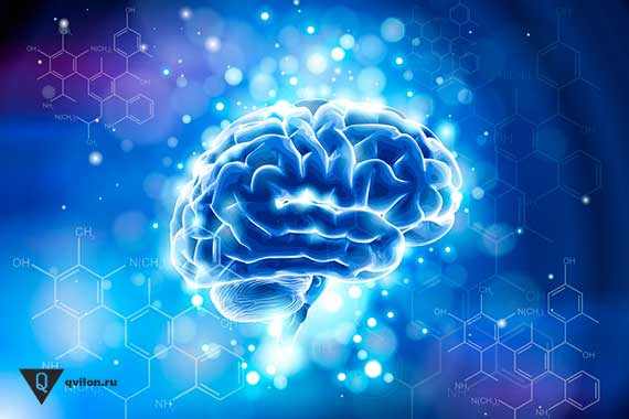 мозг нарисованный в синем цвете