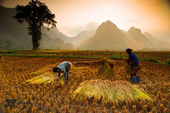 крестьяне работают в поле