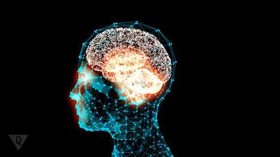 3d модель мозга