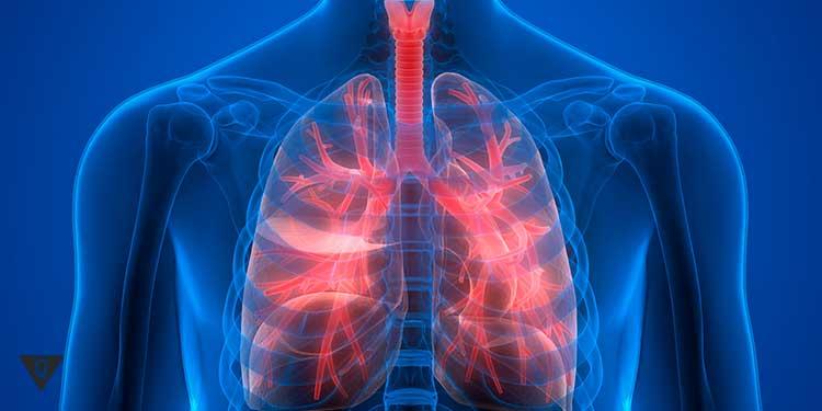 дыхательная система в красном цвете на рентгене