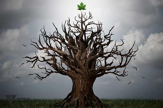 на сухом дереве растёт один листочек