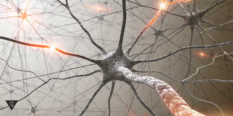 нейрон под микроскопом