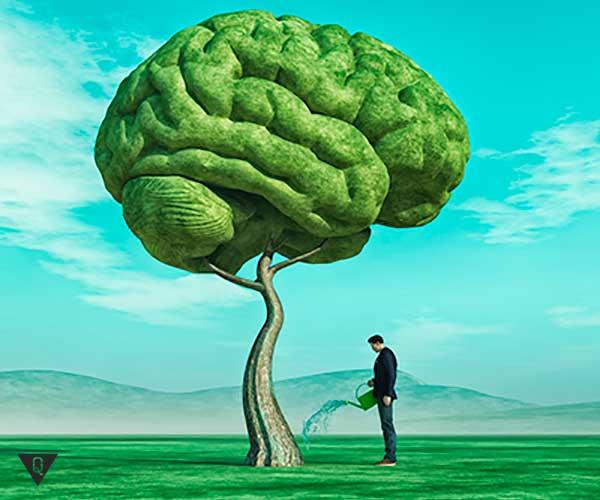 мужчина поливает дерево в форме мозга