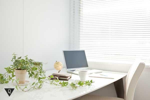 растение на рабочем столе