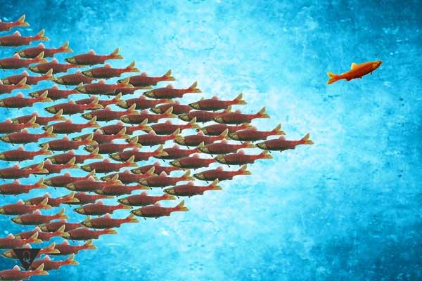 Стая рыбок плывет в одну сторону, а одна рыбка в другую