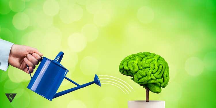 Мозг поливают из лейки, как символ его развития