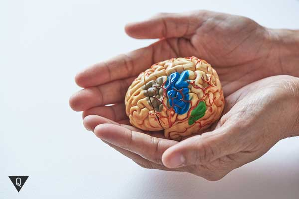 В ладошках человека лежит крошечный мозг