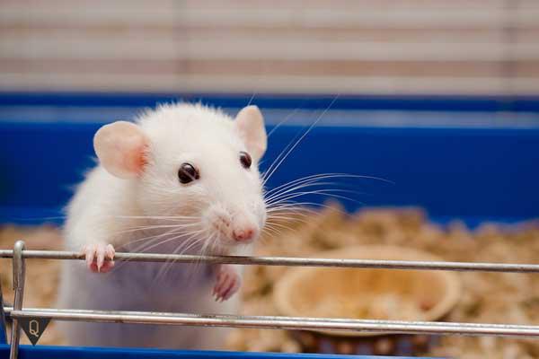 Мышка в клетке