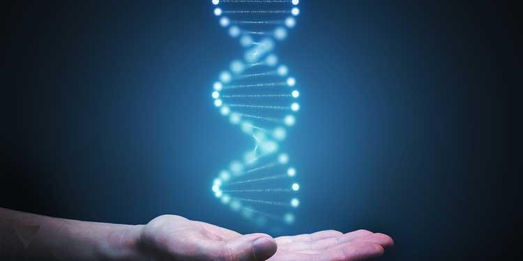 Молекула ДНК