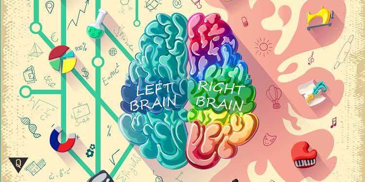 Две половины мозга