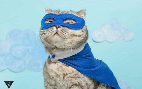Кот в костюме супергероя