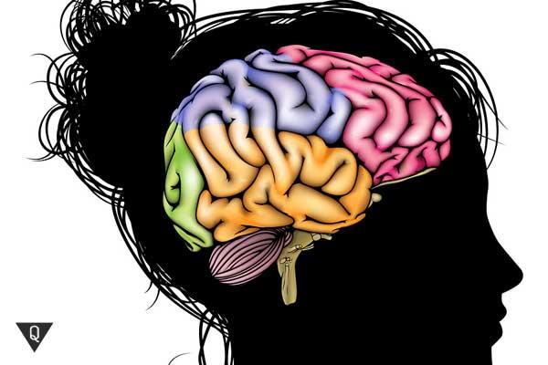 Голова девушки с разноцветными мозгами, как символ развития