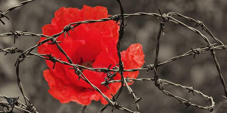 Роза за колючей проволокой