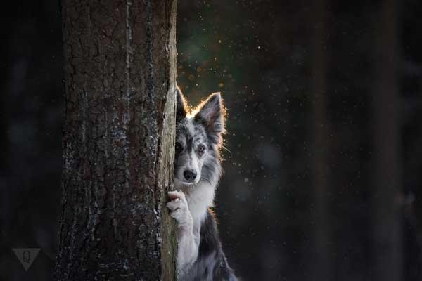 Собака выглядывает из-за угла