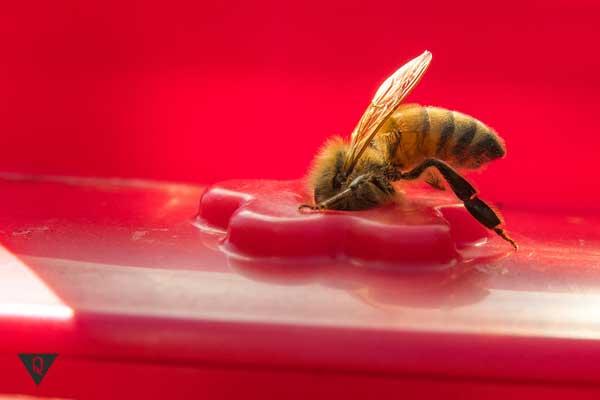 Пчела на красном фоне