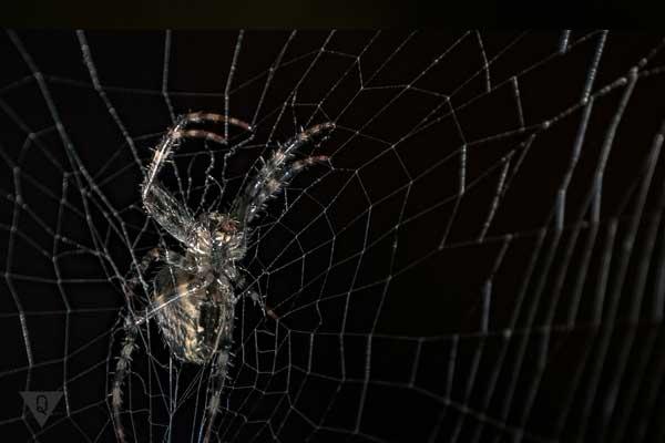 Паук сидит на паутине
