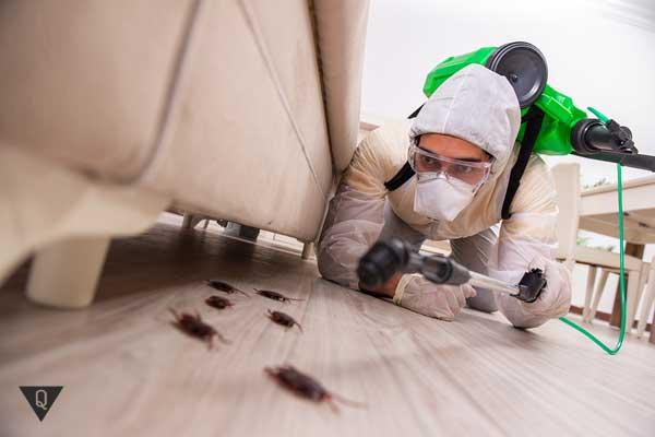 Человек с помощью химии убивает тараканов