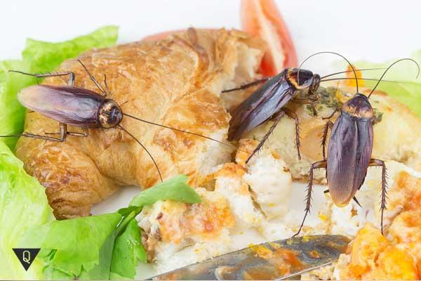 Тараканы на булочке