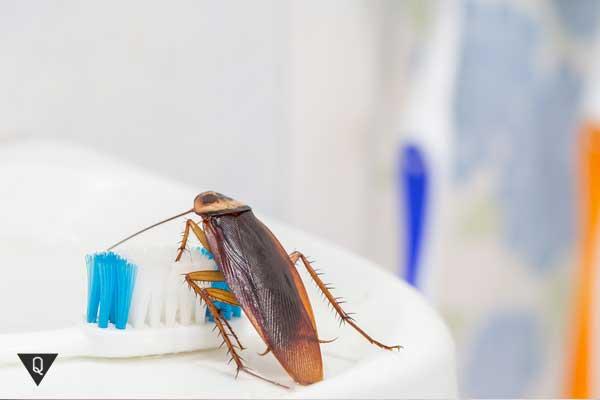 Таракан на зубной щётке