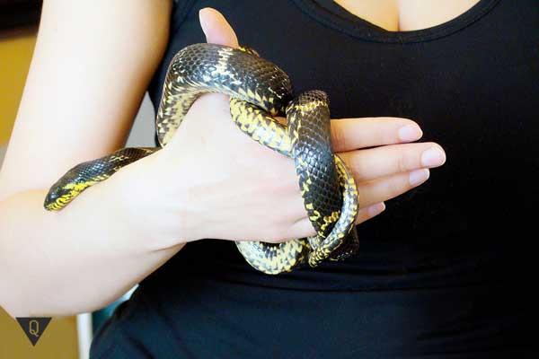 Человек держит в руках змею