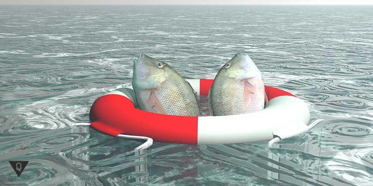 Рыбы в спасательном кругу