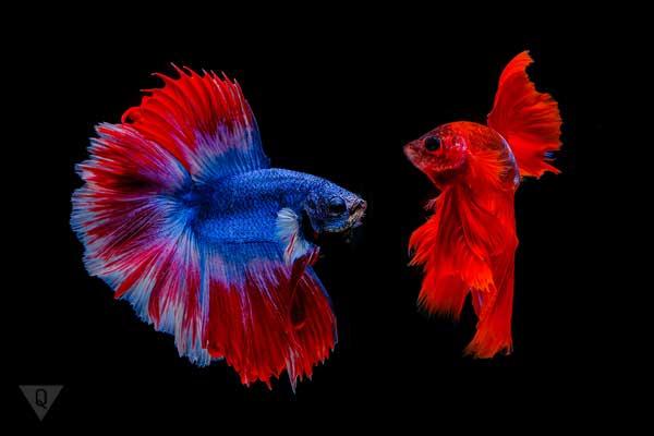 Рыбки на черном фоне