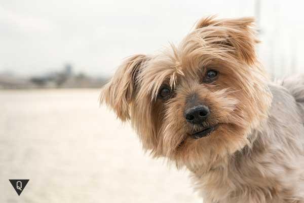 Милая собака на пляже