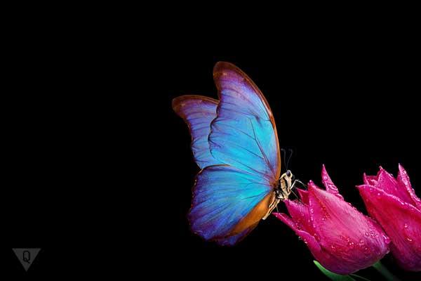 Бабочка села на цветок