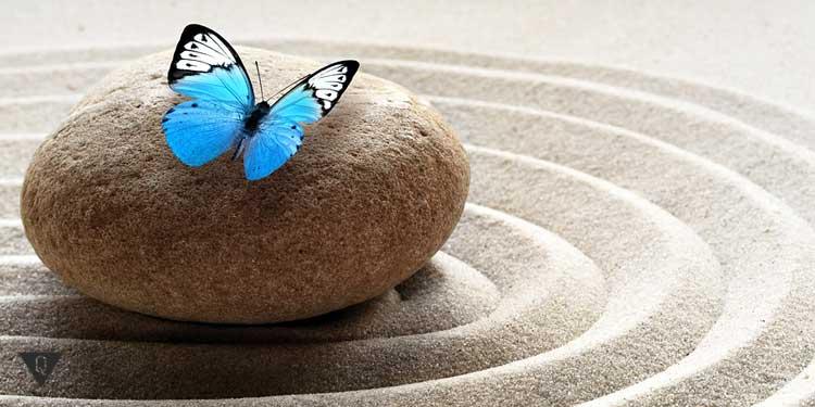 Голубая бабочка сидит на камне