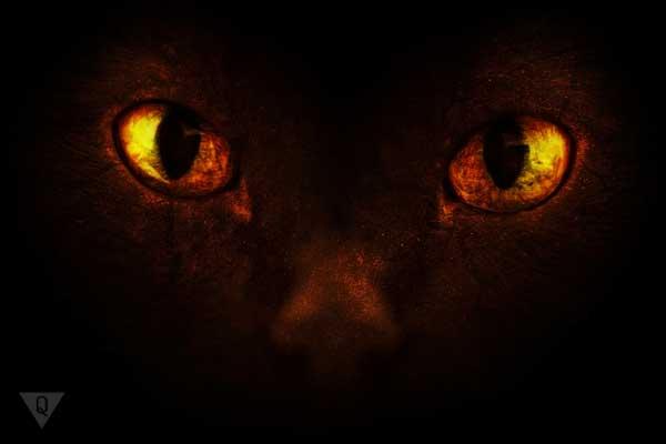 Страшные глаза кота